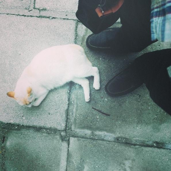 Project365 #7: Cat Nap