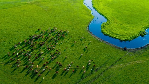 An aerial photo of the Horqin Grassland in Inner Mongolia autonomous region [Photo/China SCIO]